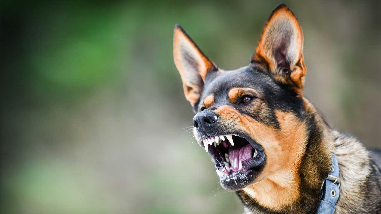 Florida Dog Bite Attorneys